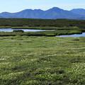Photos: 地塘の周りに広がるお花畑