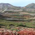Photos: 北鎮岳とチングルマの草紅葉