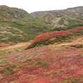 チングルマの草紅葉