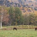 Photos: 馬と紅葉