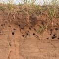Photos: ショウドウツバメ 新しい巣
