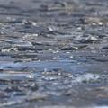 板状の氷で覆われた砂浜海岸