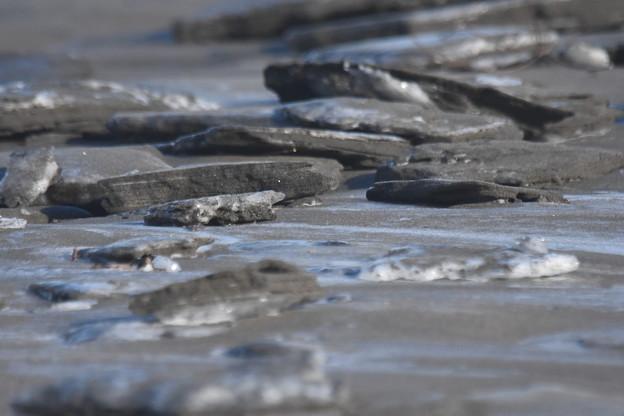 砂浜海岸の板状の氷2