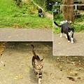 飲食店にいる猫は「ツンデレ」から「ツン」の部分を除いた子が多い。すり寄ってくるどころかすげー追ってくる。見送りか
