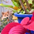 写真: 犬と植物