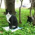 写真: cats