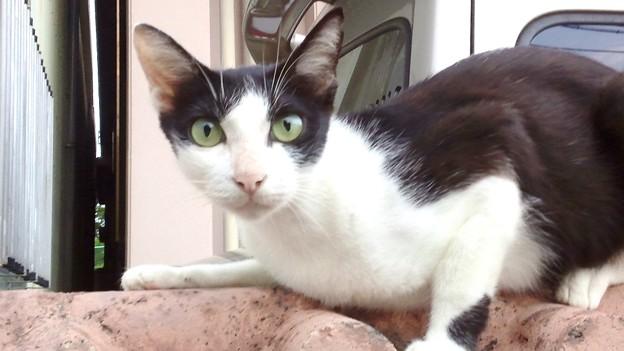 Photos: 鰹だしにつられて寄ってきた猫