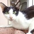 写真: 鰹だしにつられて寄ってきた猫