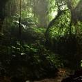 写真: 古代の森