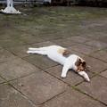 写真: 猫が落ちてたらとりあえず見るでしょ。