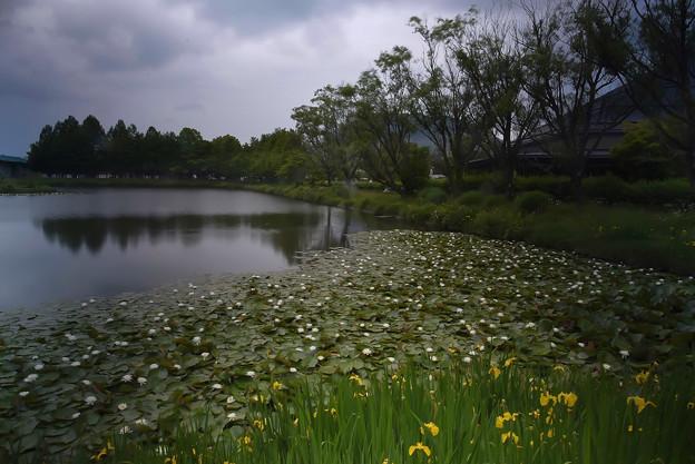 矢ケ崎公園 (4)