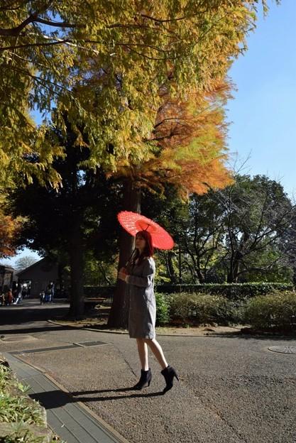 ラクウショウの紅葉