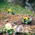 黄色いお花♪