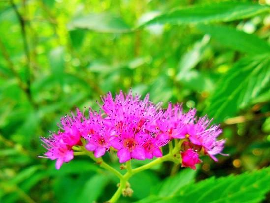 ピンクなお花