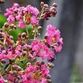 Photos: ピンクのお花