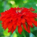 Photos: 紅なお花
