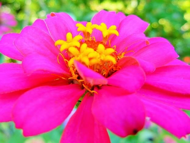 お花の中のお花