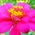 Photos: お花の中のお花