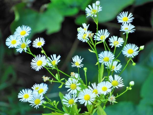 小さなお花