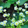 Photos: 小さなお花