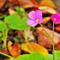 Photos: 小さな可愛いお花