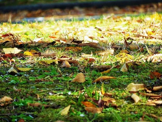 落ち葉地面