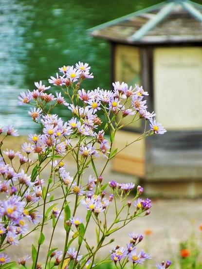 花の集まり