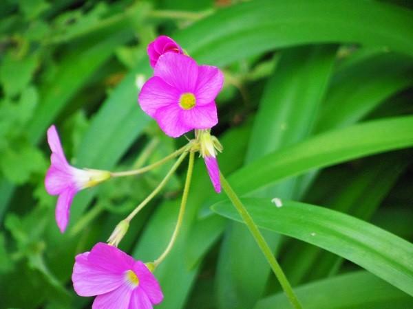可愛らしいお花