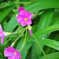 Photos: 可愛らしいお花