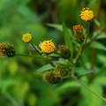 Photos: 小さな黄色