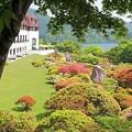 Photos: 山のホテルのツツジ