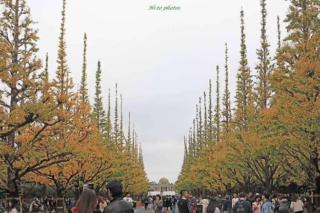 黄葉する東京