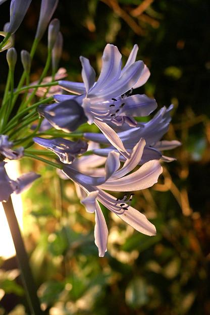 写真: 夜の花