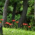 写真: 日比谷公園にて