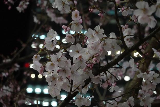 新宿東南口広場にて