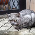 Photos: 今日のにゃんこ