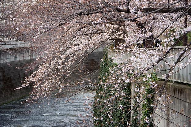 神田川14