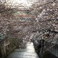 Photos: 神田川12