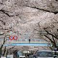 Photos: 中野通りにて