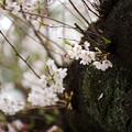 Photos: 新井薬師公園