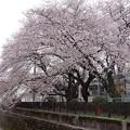 Photos: 鷺宮