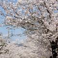 Photos: 長瀞北