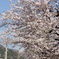 Photos: 長瀞南