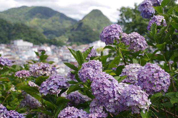 Photos: 下田公園にて