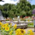 Photos: ふなばしアンデルセン公園にて
