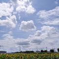 Photos: ひまわりガーデン武蔵村山にて