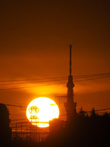 Photos: 朝陽とスカイツリー
