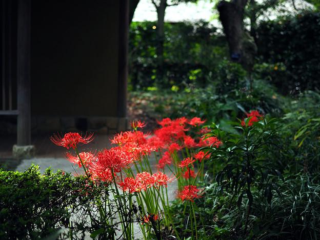 Photos: 府中市郷土の森博物館にて