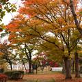 Photos: 盛岡城跡(岩手公園)にて