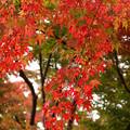 Photos: 盛岡城跡にて